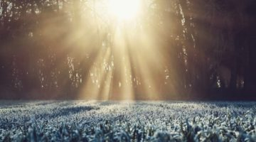What entrepreneurs can learn from the seasons