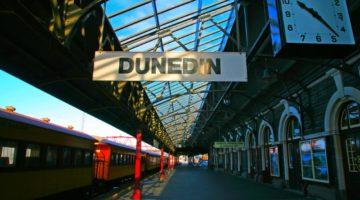 dunedin startup ecosystem