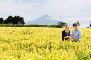 New Zealand Quinoa