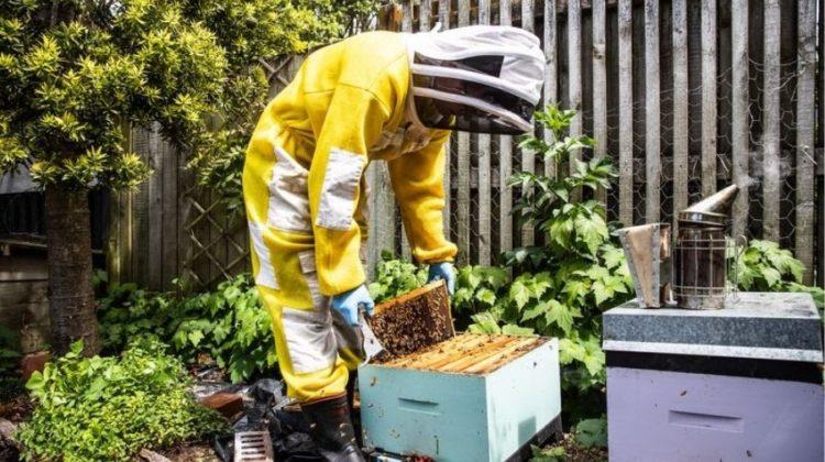City Slicker Honey